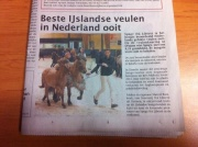 Spúgy frá Libèrté hoogst gekeurde IJslander veulen ooit in Nederland